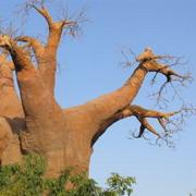 дерево целей