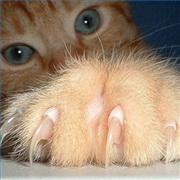 Как подстричь когти кошке